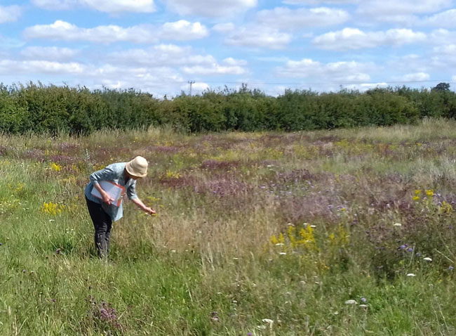 member of peddars meadow group inspects neighbouring meadow with some degree of envy