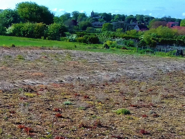 The patchy barren ground of Peddars Meadow pre cultivation (tilling).
