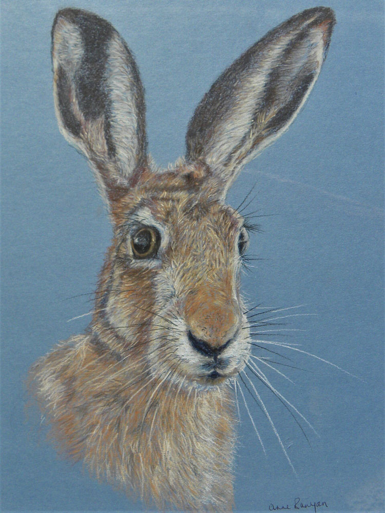 Anne Bunyan - Brown Hare - pastel on paper