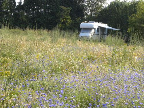 camping in flower meadow gave us dreams