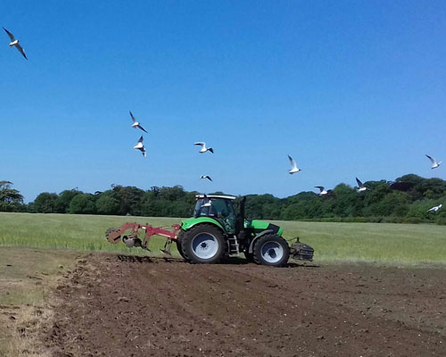 cultivating peddars meadow