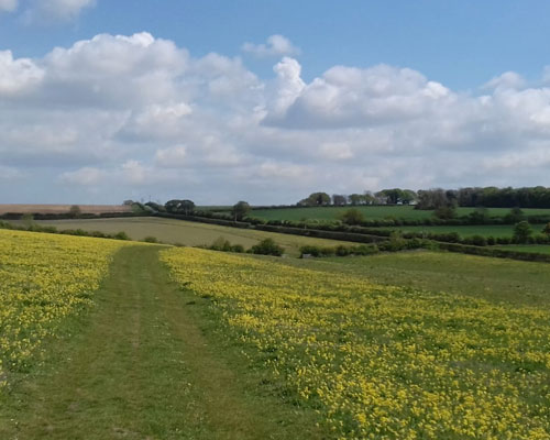 fields of vision - Cowslips Courtyard Farm