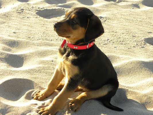 Flora as a puppy
