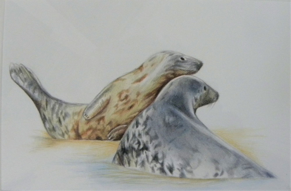 Isabelle Wingham - Gold and Silver Seals - colour pencil on watercolour paper