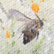 Bee by Kerry Farr