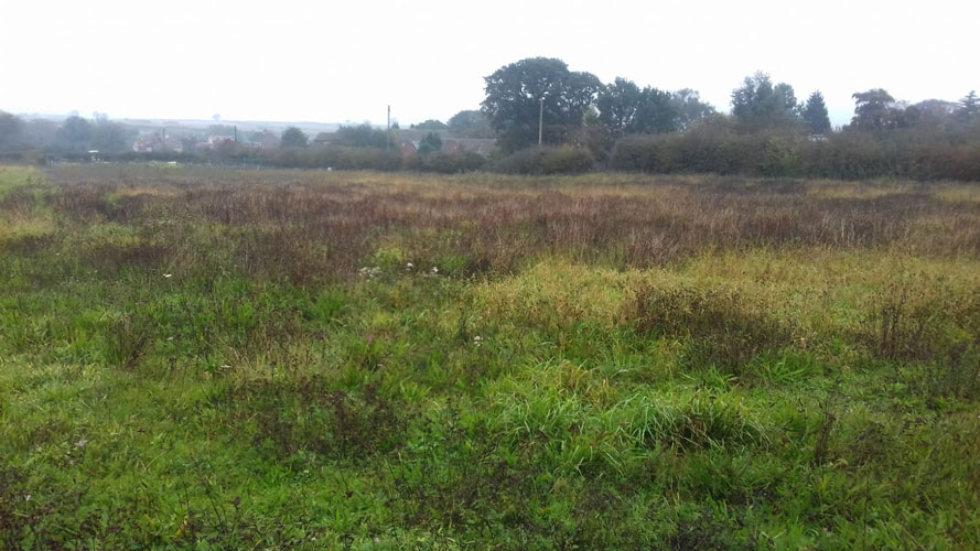 Peadows meadow at rest