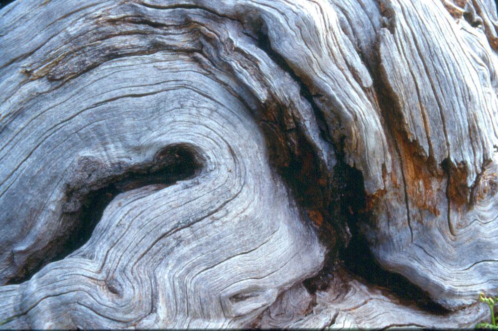 Hanneke Robson - Oak Sculpture - colour photograph