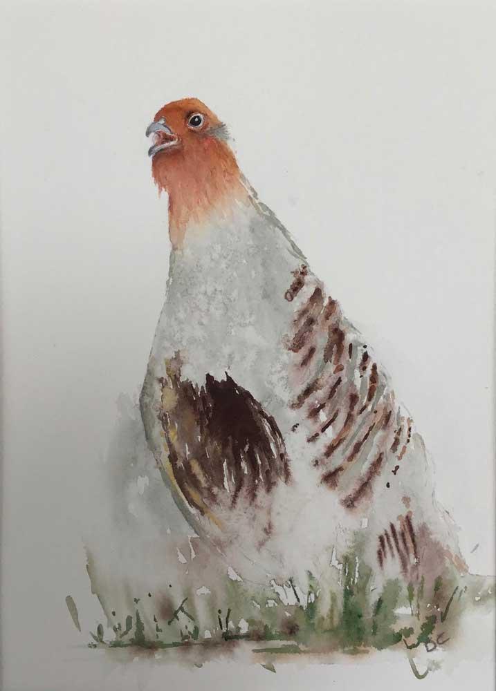 Deanee Clark - Grey partridge